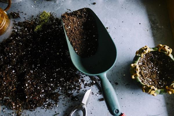 Najczęściej wykorzystywane podłoża w ogrodnictwie